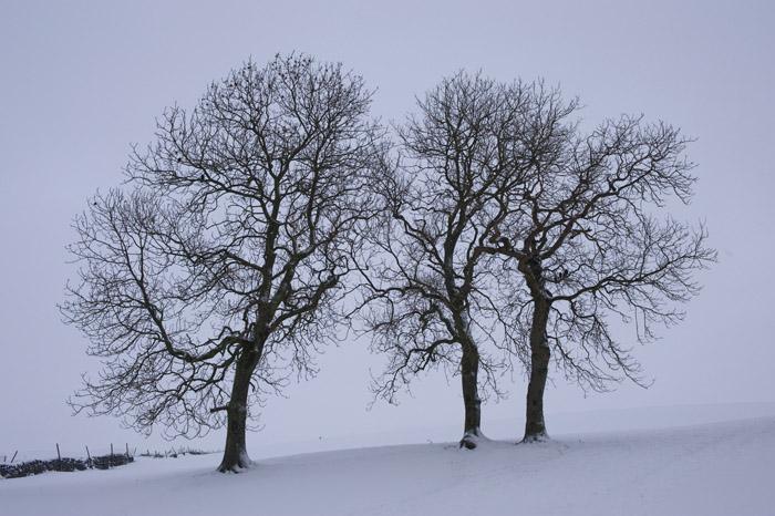 Gift idea - Winter Trees Print