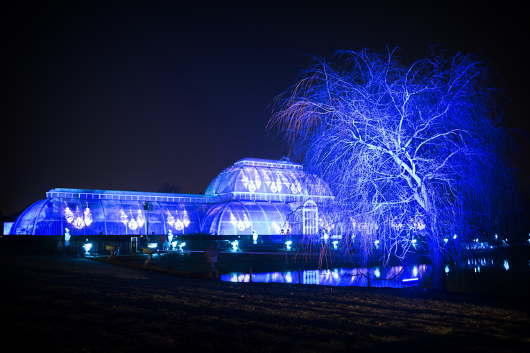 The Palm House in Blue