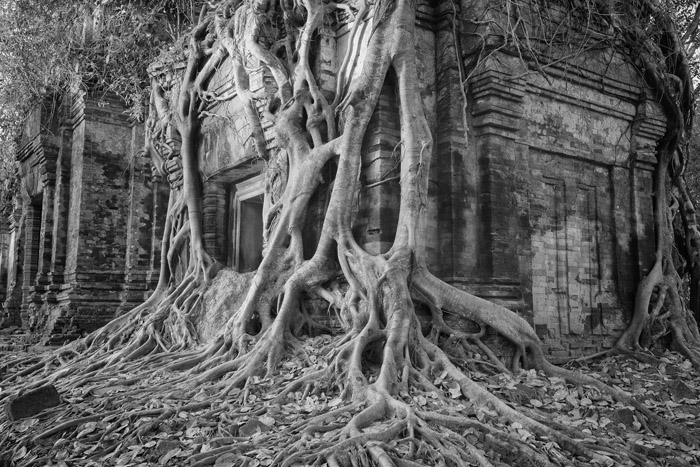 Sacred places 4: The Temple in the Jungle, Angkor, Cambodia