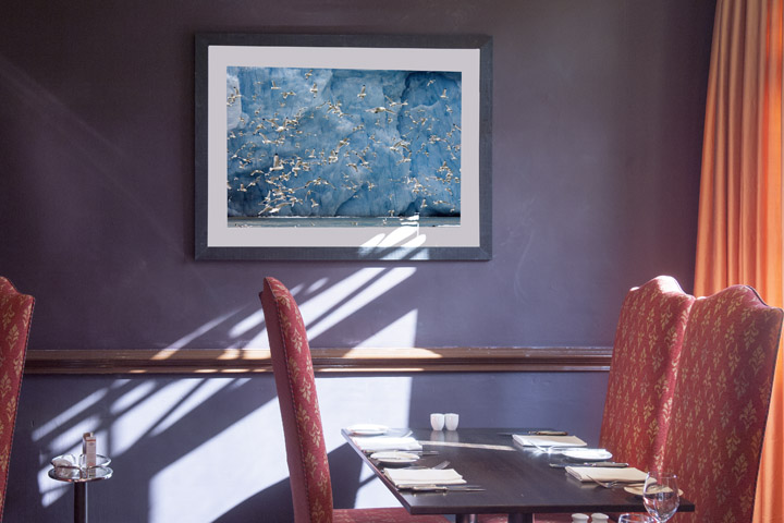 Framed fine art photography of arctic birds at the Hendon Hall Hotel in London