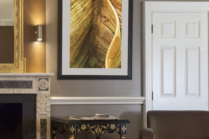 Framed photograph of tree study in the reception of the Hendon Hall Hotel in London