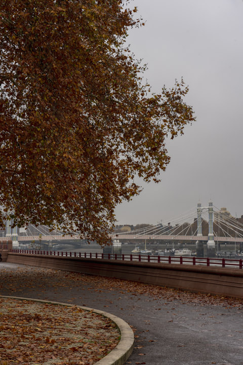 Photograph of Albert Bridge 45