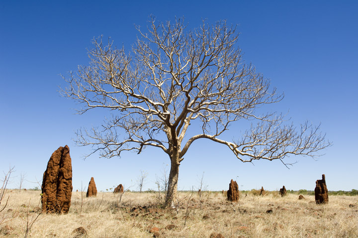 Amonst the Termite Mounds Outback Australia