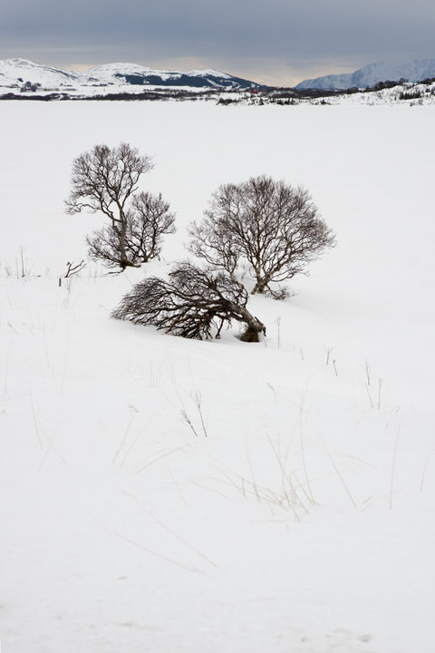 Photograph of Arctic Snow Scene 2