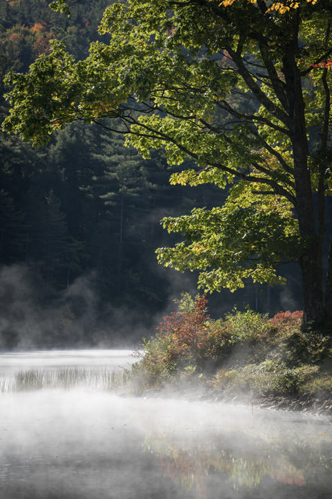 Photograph of Autumn Mist 1