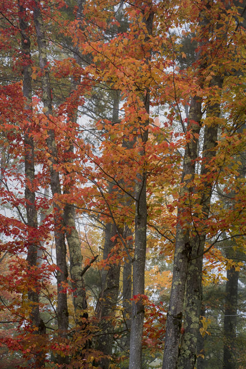 Photograph of Autumn Trees 2