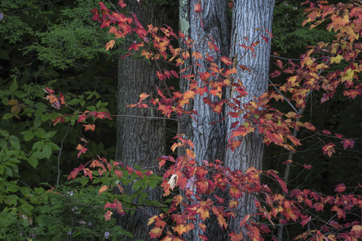 Photograph of Autumn Trees 8