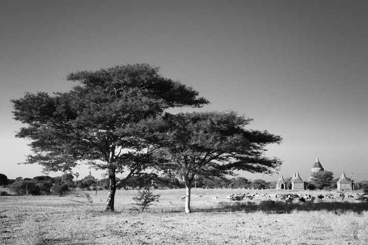 Bagan Countryside 1