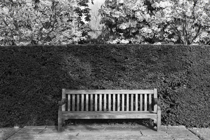 Photograph of Bench Regents Park 1