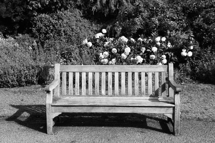 Photograph of Bench Regents Park 2