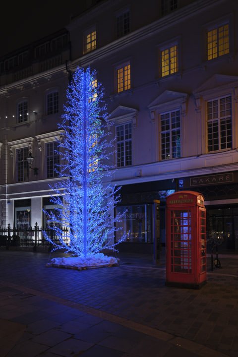 Photograph of Blue Tree 1