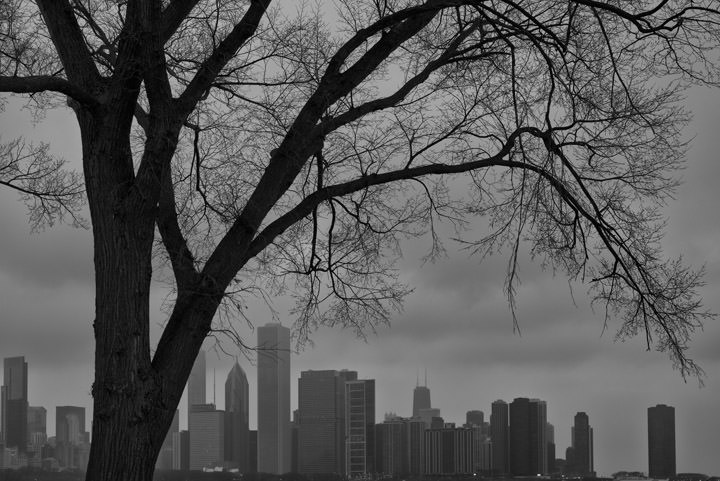 Photograph of Chicago Skyline 6
