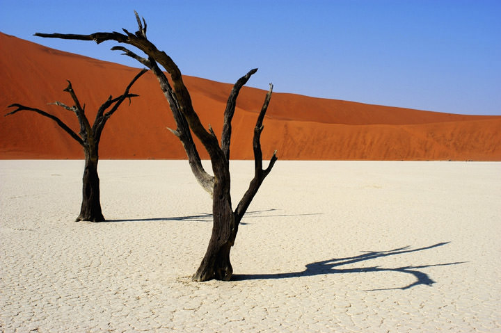 Photograph of Dead Vlei
