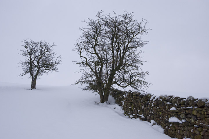 Drystone Wall in Winter