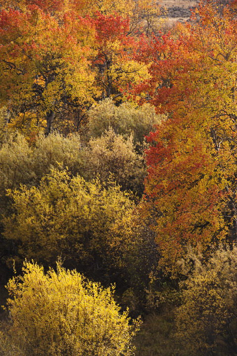 Photograph of Fall Colours 2
