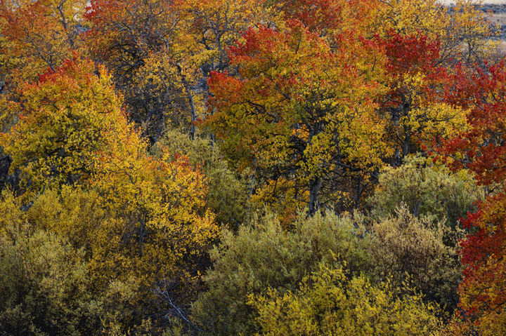 Photograph of Fall Colours