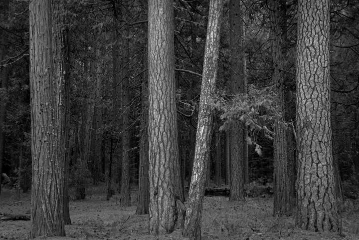 Photograph of Forest Scene 6