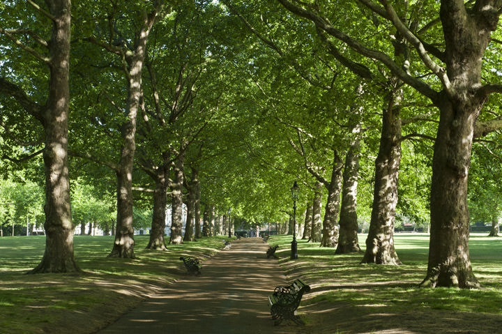 Photograph of Green Park 1