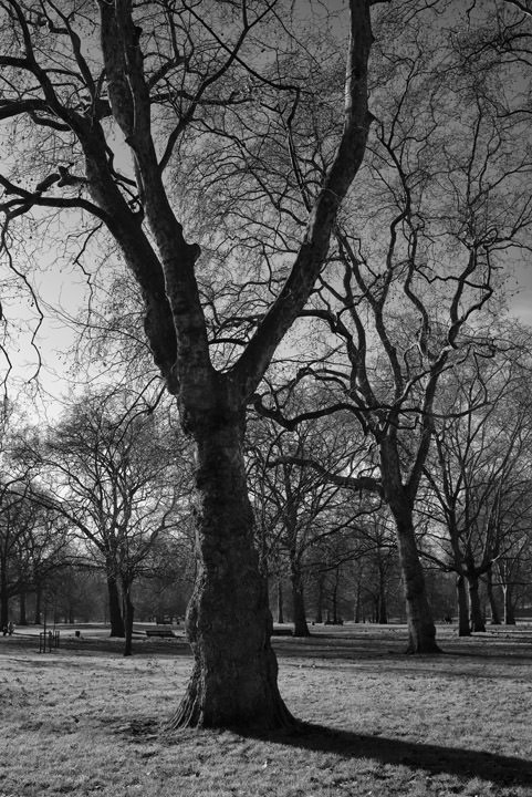 Photograph of Green Park 6