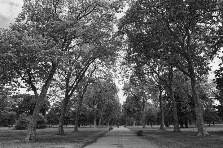 Photograph Of Hyde Park 2 Black And White London Photos