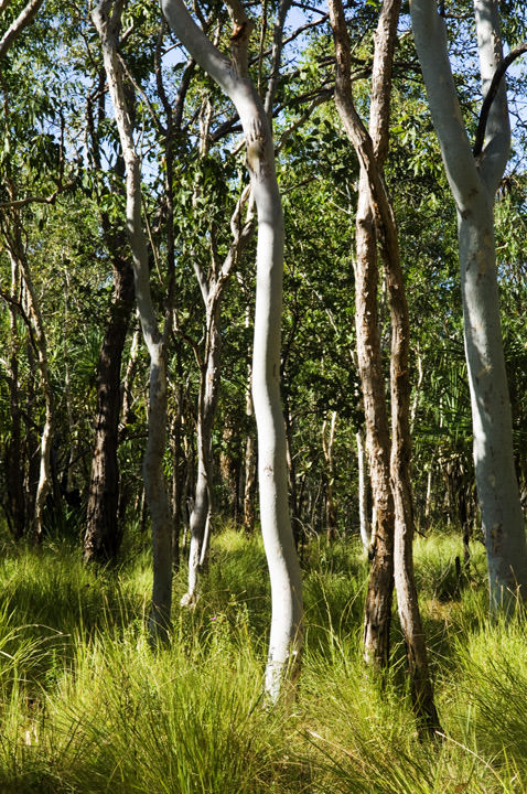 Photograph of Kakadu Forest