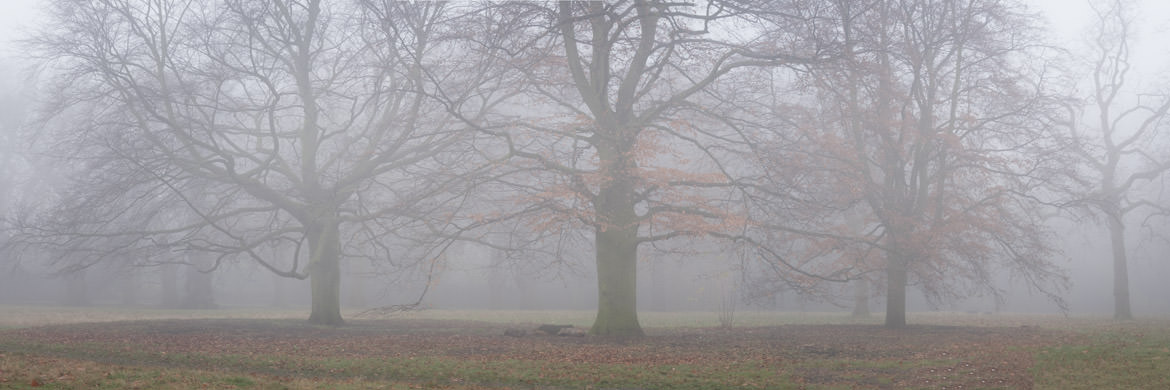 Photograph of Kensington Gardens 4