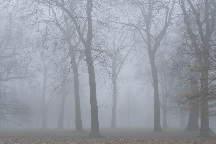 Photograph of Kensington Gardens 5