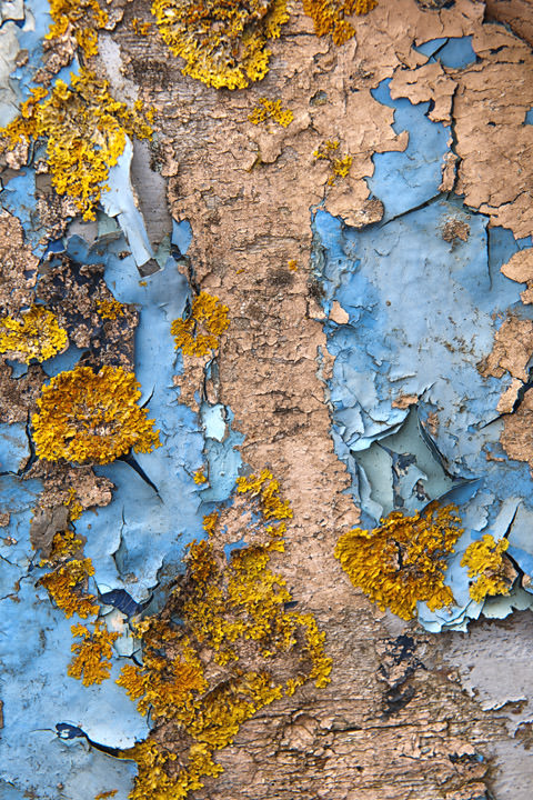 Photograph of Lichen Patterns 1