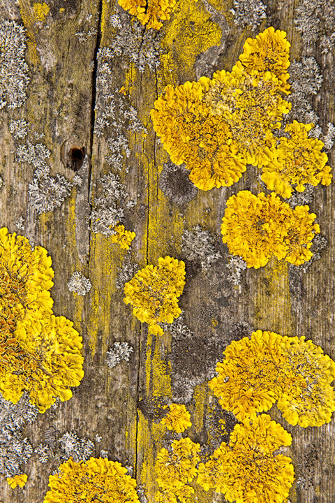 Photograph of Lichen Patterns 2