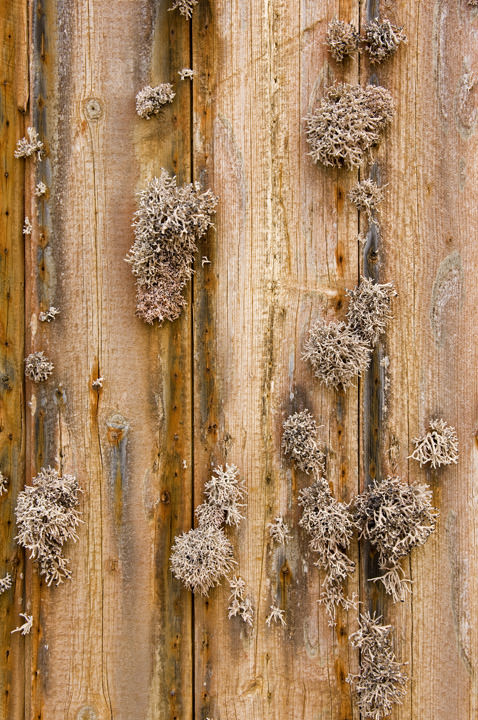 Photograph of Lichen on Wood
