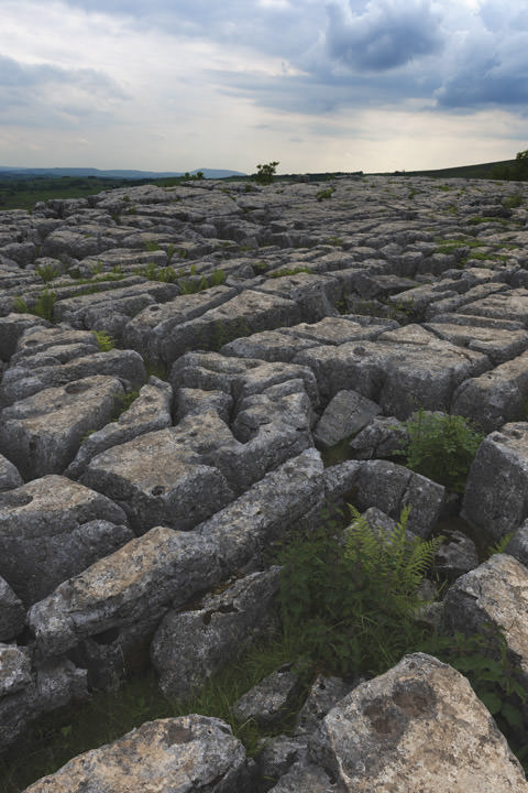 Photograph of Limestone Pavement - Malham 4