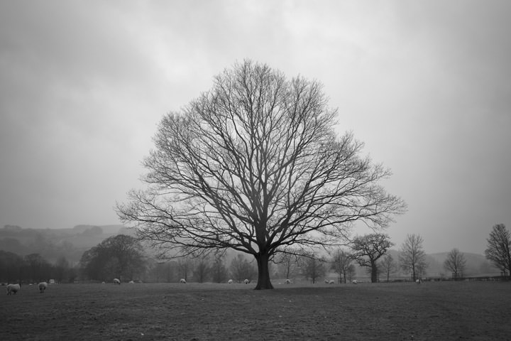Photograph of Oak 1