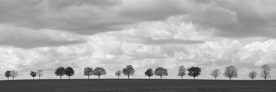 Pairs of Trees