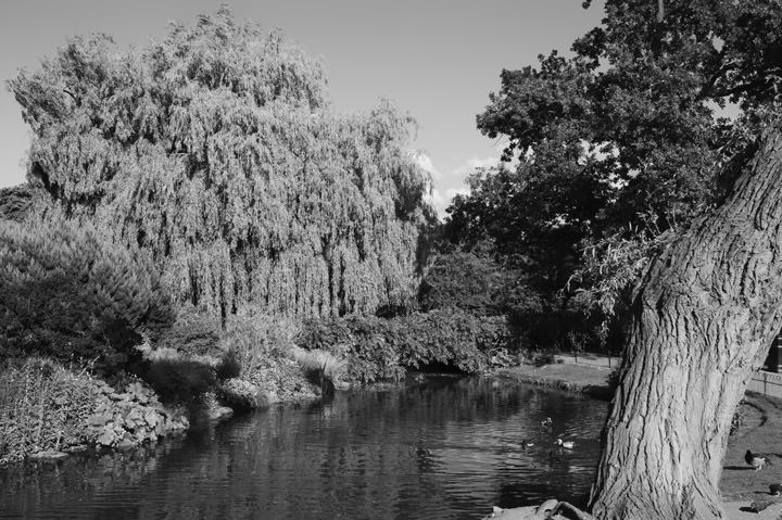 Photograph of Regents Park 16