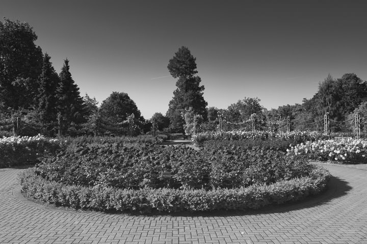 Photograph of Regents Park 5