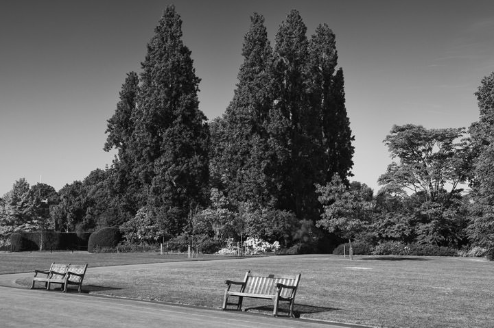 Photograph of Regents Park 8
