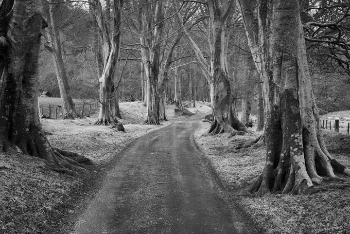 Photograph of Road through the Beeches 1