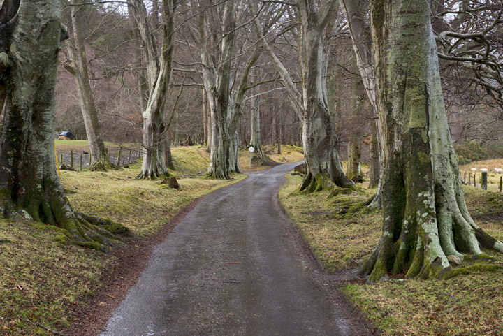 Road through the Beeches