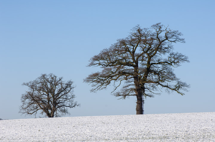 Snow in Hertfordshire