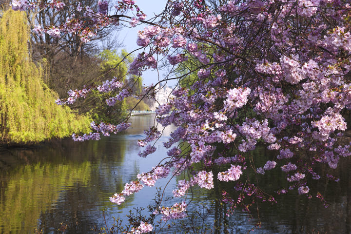 Springtime - St James Park