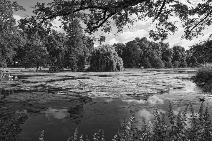 Photograph of St James Park 3