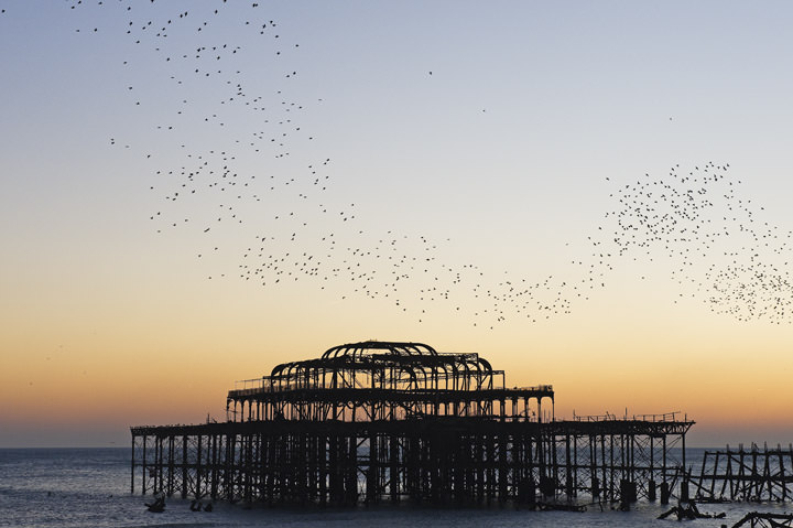 Starlings over West Pier Brighton - England