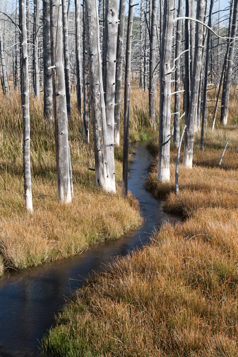 Photograph of Stream through the Aspens
