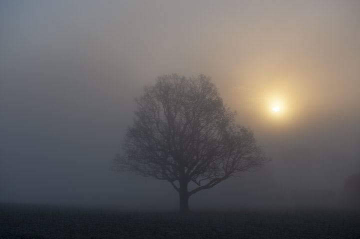 Photograph of Sunrise Tree