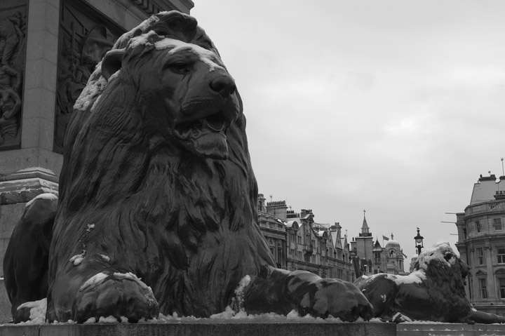 Photograph of The Lion in Winter - Trafalgar Square