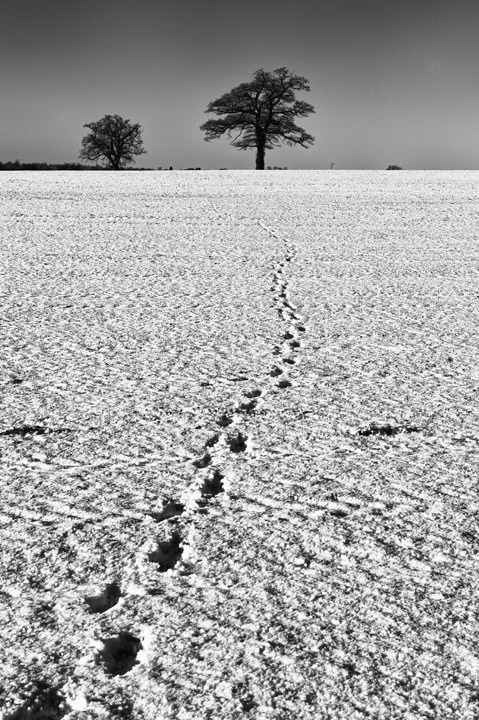 Photograph of Tracks through the Snow