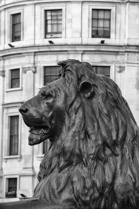 Photograph of Trafalgar Square Lion 2
