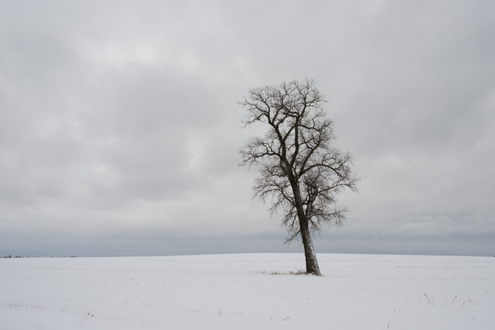 Tree in Winter 1
