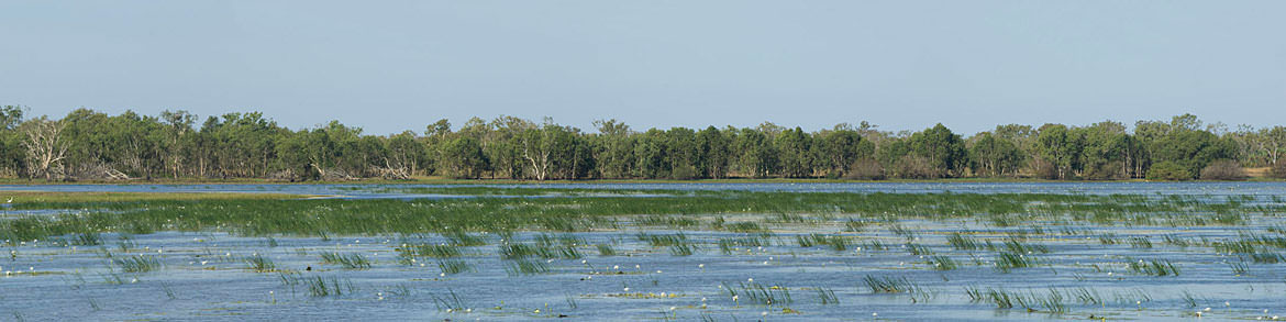 Wetlands Northern Territory - Australia