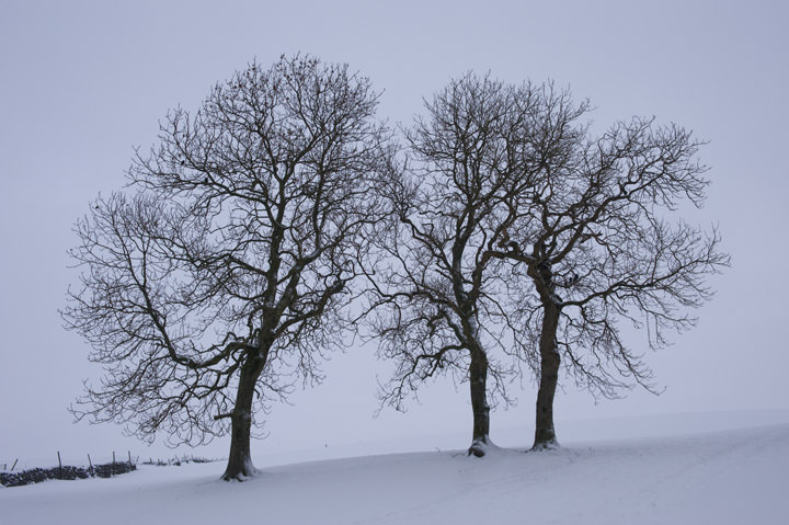Photograph of Winter Silhouettes